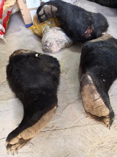 分工明确、多省作案 陕西破获特大猎杀濒危野生动物案