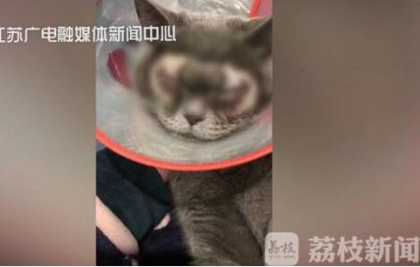 生活已经拿小猫咪开刀了!万元给猫割双眼皮 被质疑残忍