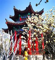 春天的济南大明湖