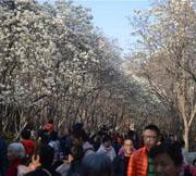 百花公园开启赏花模式