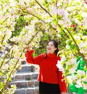春游赏花季!