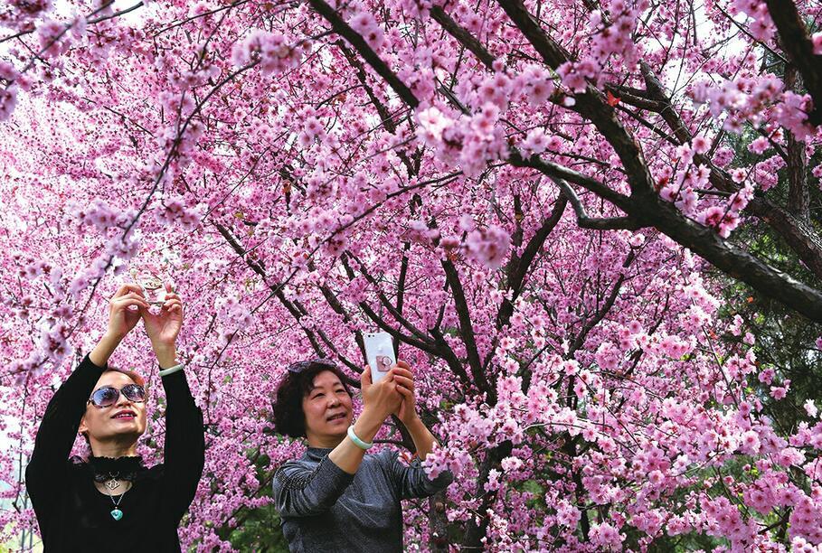 济南千佛山:正是山花烂漫时 姹紫嫣红春意浓