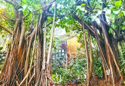 """探营世园会最""""热""""植物馆 哪些..."""