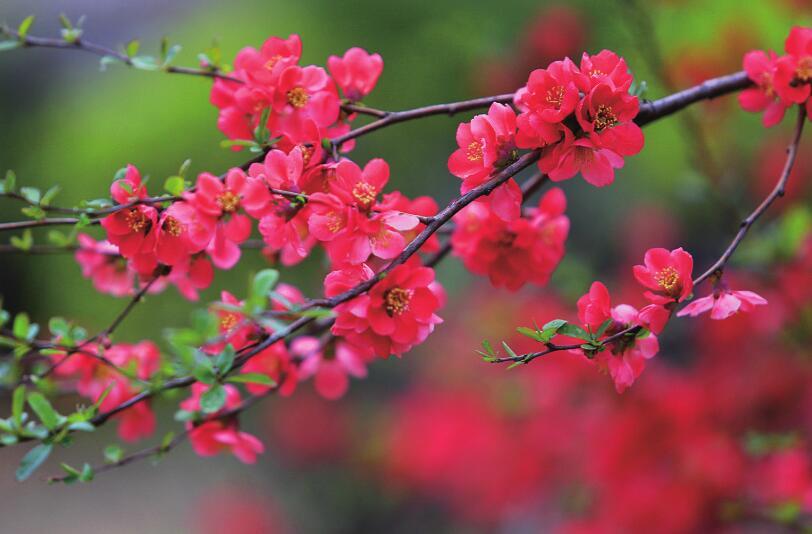 济南:又是一年春光好 缤纷花海植物园