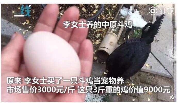 9000元宠物鸡被偷什么情况?详情始末曝光这真相让人想哭