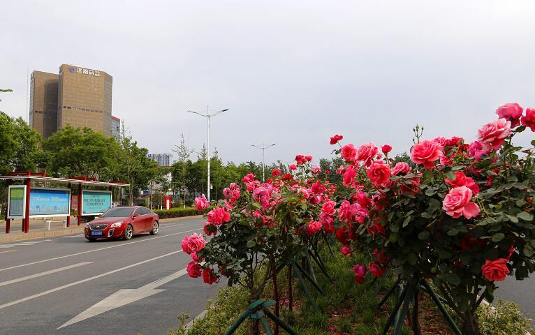"""绿草茵茵 花团锦簇 泉水潺潺 一步一景遇到最美""""花样泉城"""""""
