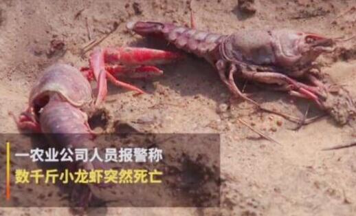 杀伤力强!熊孩子毒死小龙虾 小孩轻易买到农药让人细思极恐