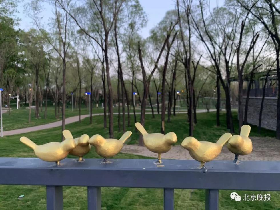 世园会小鸟被掰断 小巧玲珑、憨态可掬的小鸟得罪谁了?