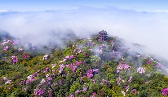 """南川擦亮旅游""""金字招牌""""贫困村吃上了旅游饭"""