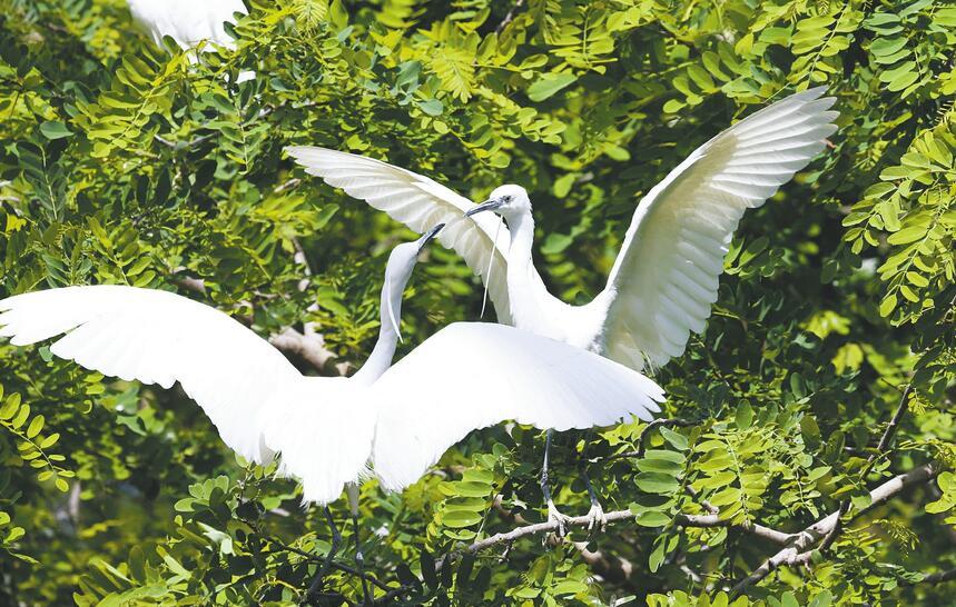 动物园:市鸟翩翩起舞成风景
