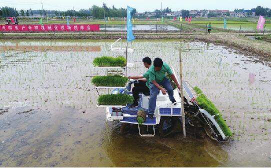 """济南市举办水稻插秧节 现场插秧上演""""人机大战"""""""