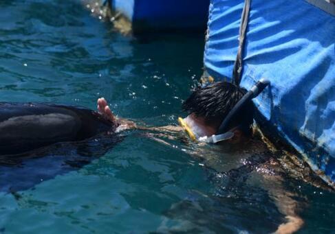 惊呆了!三亚领航鲸死亡是什么情况?始末详情曝光终于真相了?