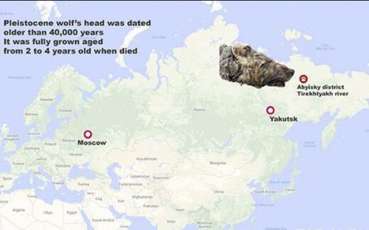 【大开眼界】俄国四万年前狼头长这样?凶狠的尖牙诉说着非凡过往
