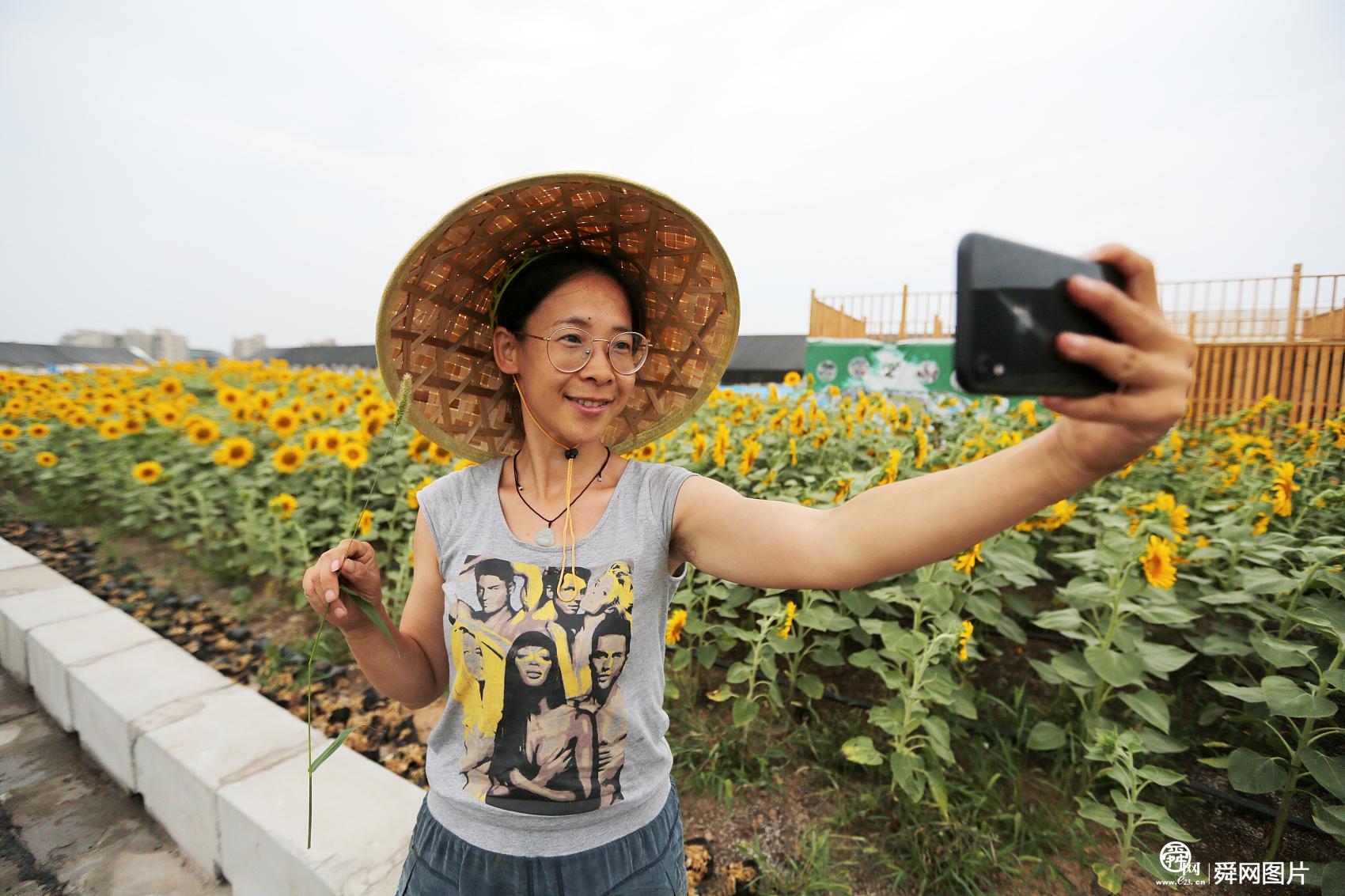 郑州一商场楼顶现3000平方米向日葵 养兔吃草引市民围观