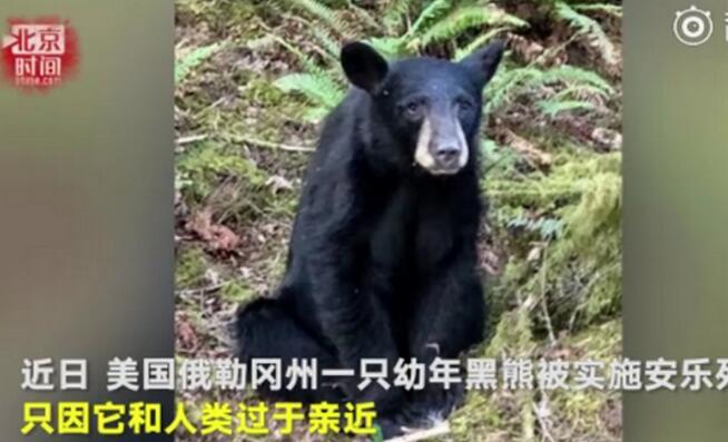人间不值得!黑熊与人亲被安乐死 对人友好愿意与人自拍