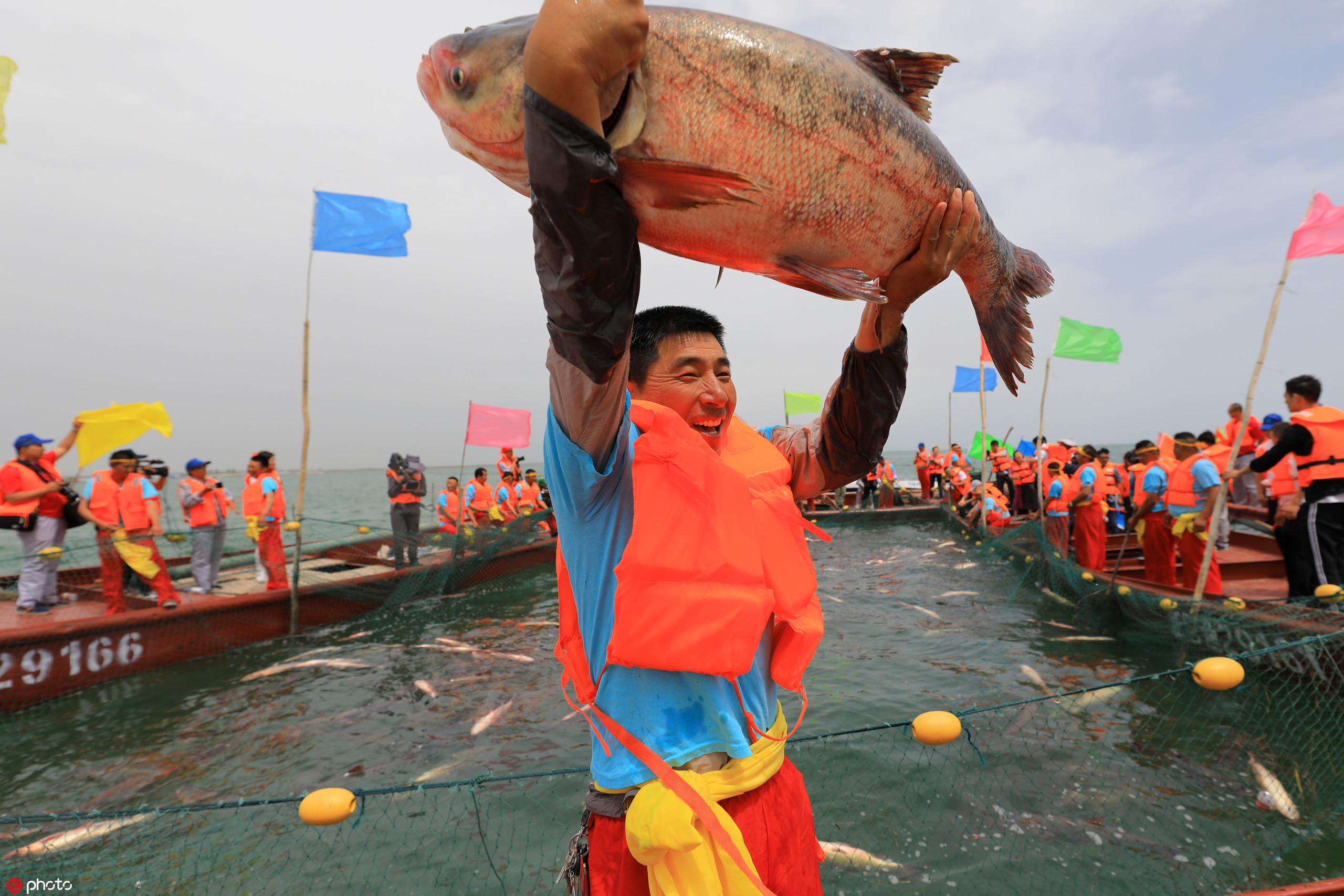 新疆博斯腾湖开湖捕鱼,鱼儿跳得欢 乐坏渔民!