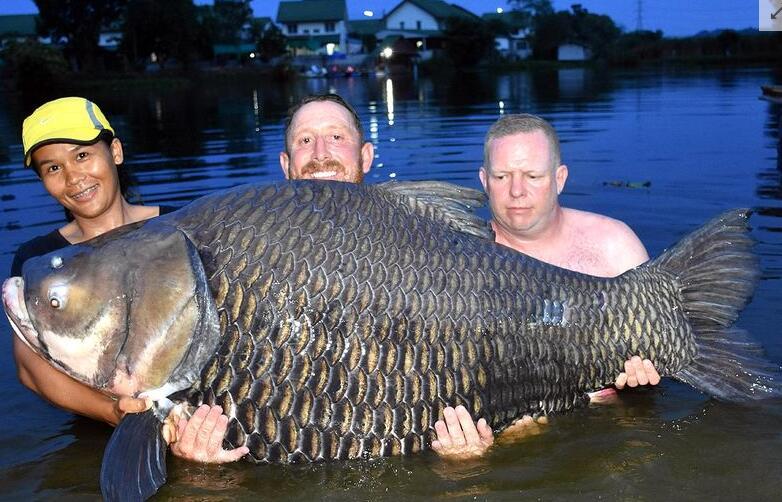吓尿了!搏斗80分钟钓起巨鱼 打破世界纪录这鱼成精了吗?