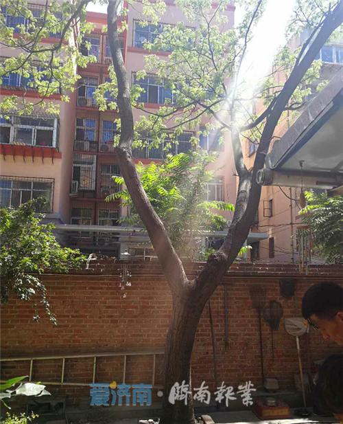全福街道南全福西区:修剪树木,清除安全隐患,消除居民烦恼