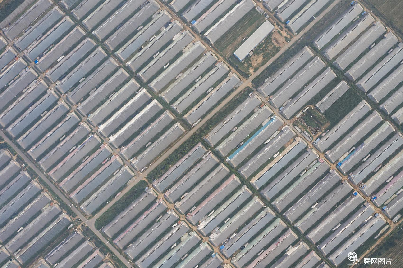 山东滨州:小村庄的黄瓜梦 助力全村脱贫致富