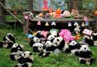 2018年出生的大熊猫幼仔集体过生日