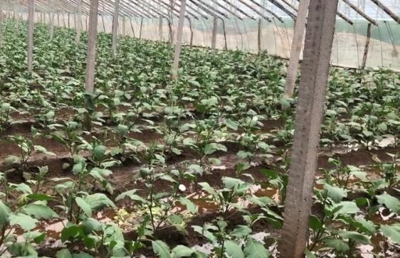 台风过境蔬菜之乡 记者寿光实地探访