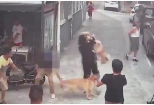 纵狗咬人被刑拘 是否存在故意纵狗咬人情节?还需进一步确认
