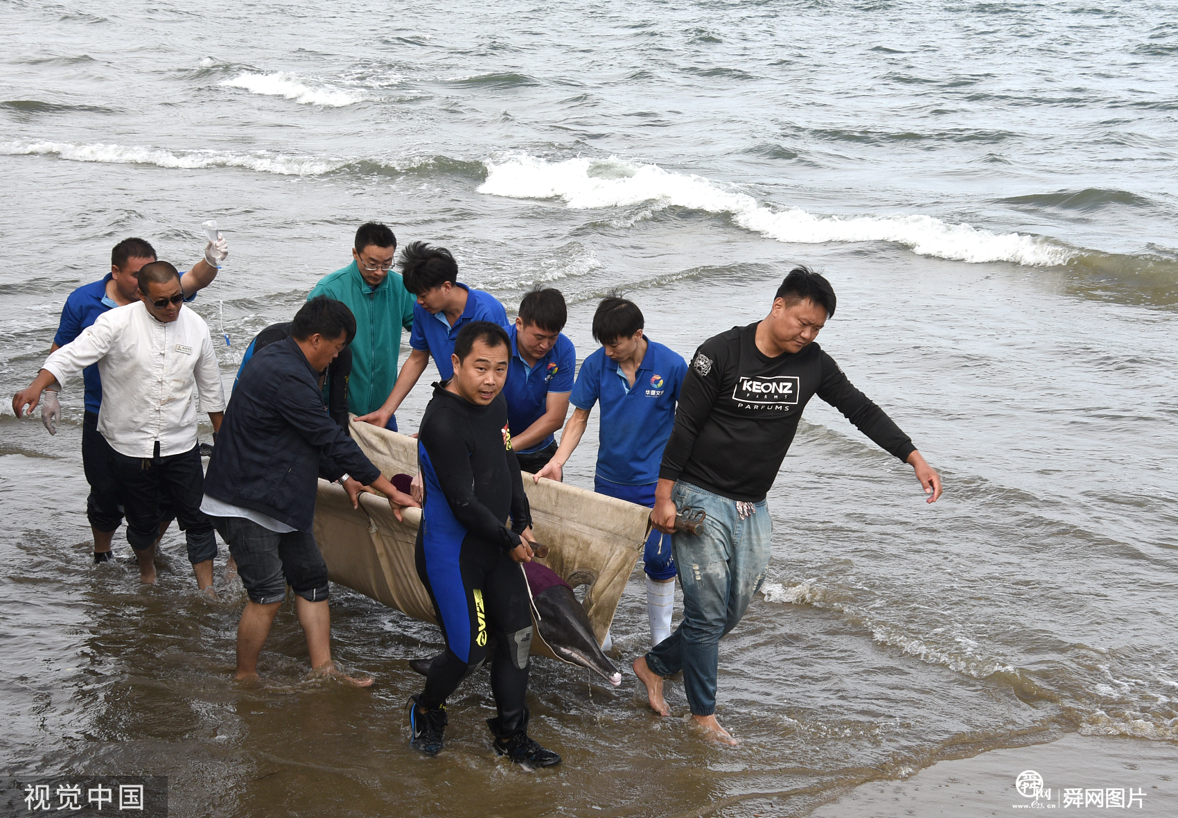 山东威海:石岛湾现受伤海豚 市民急救