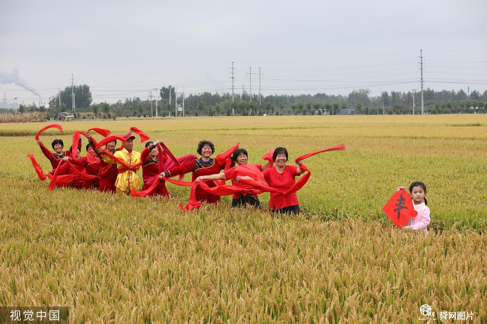山东日照:水稻大面积进入收割阶段 农民载歌载舞庆丰收