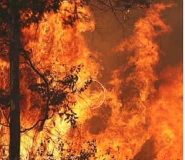 揪心!澳洲大火考拉死亡是怎么回事?终于真相了,原来是这样!