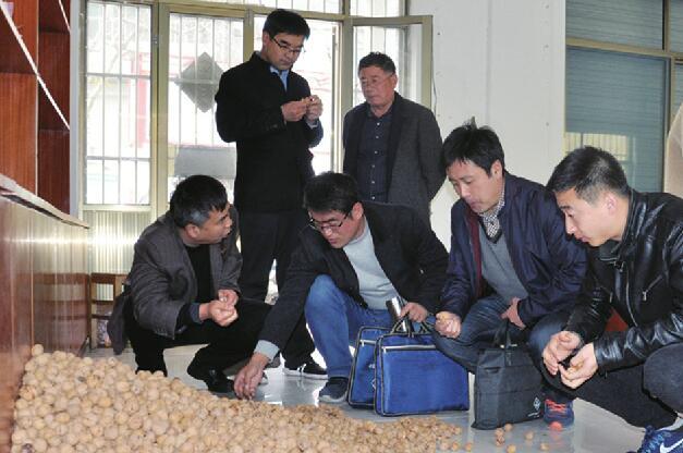 核桃园村村支书带万斤核桃进城义卖 专家组团进村帮核桃产业找出路