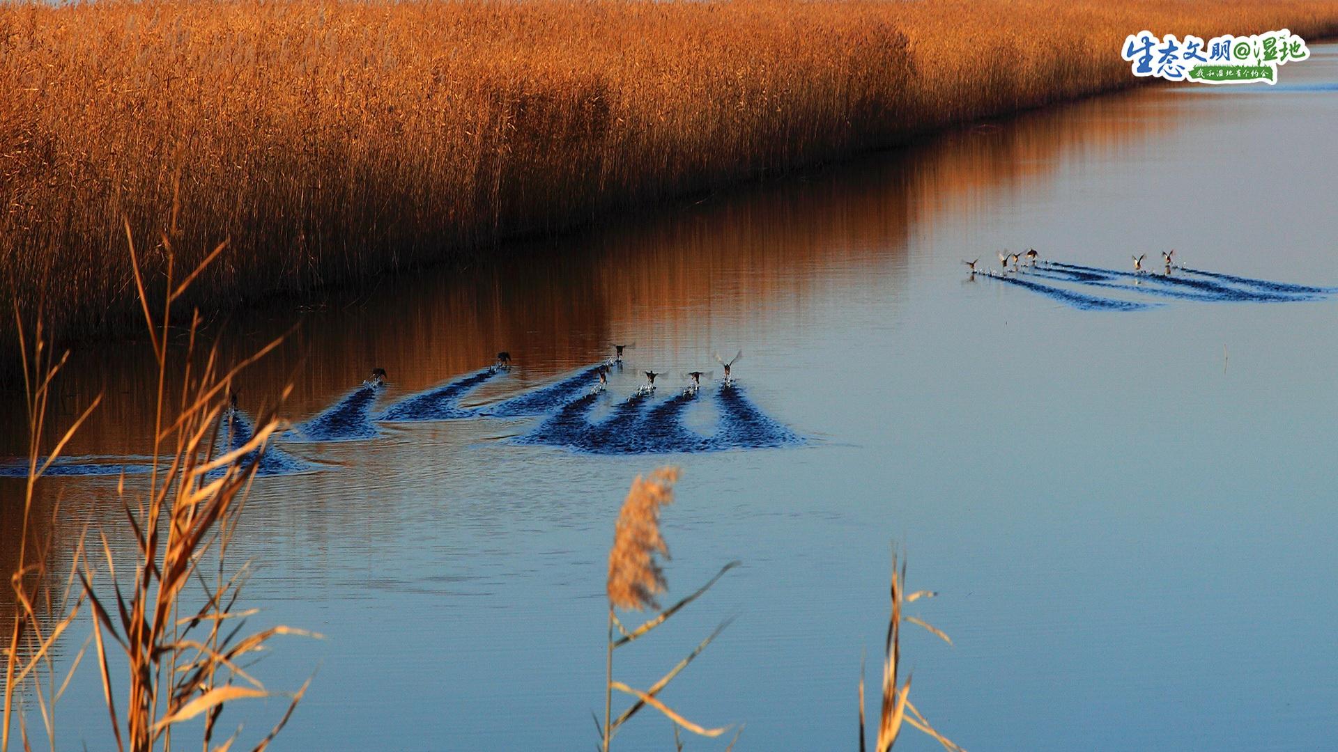 天津地处九河下梢,湿地资源丰富,根据第二次全国湿地资源调查,天津各类湿地总面积29.56万公顷,陆域湿地占全市国土面积的17.1%。