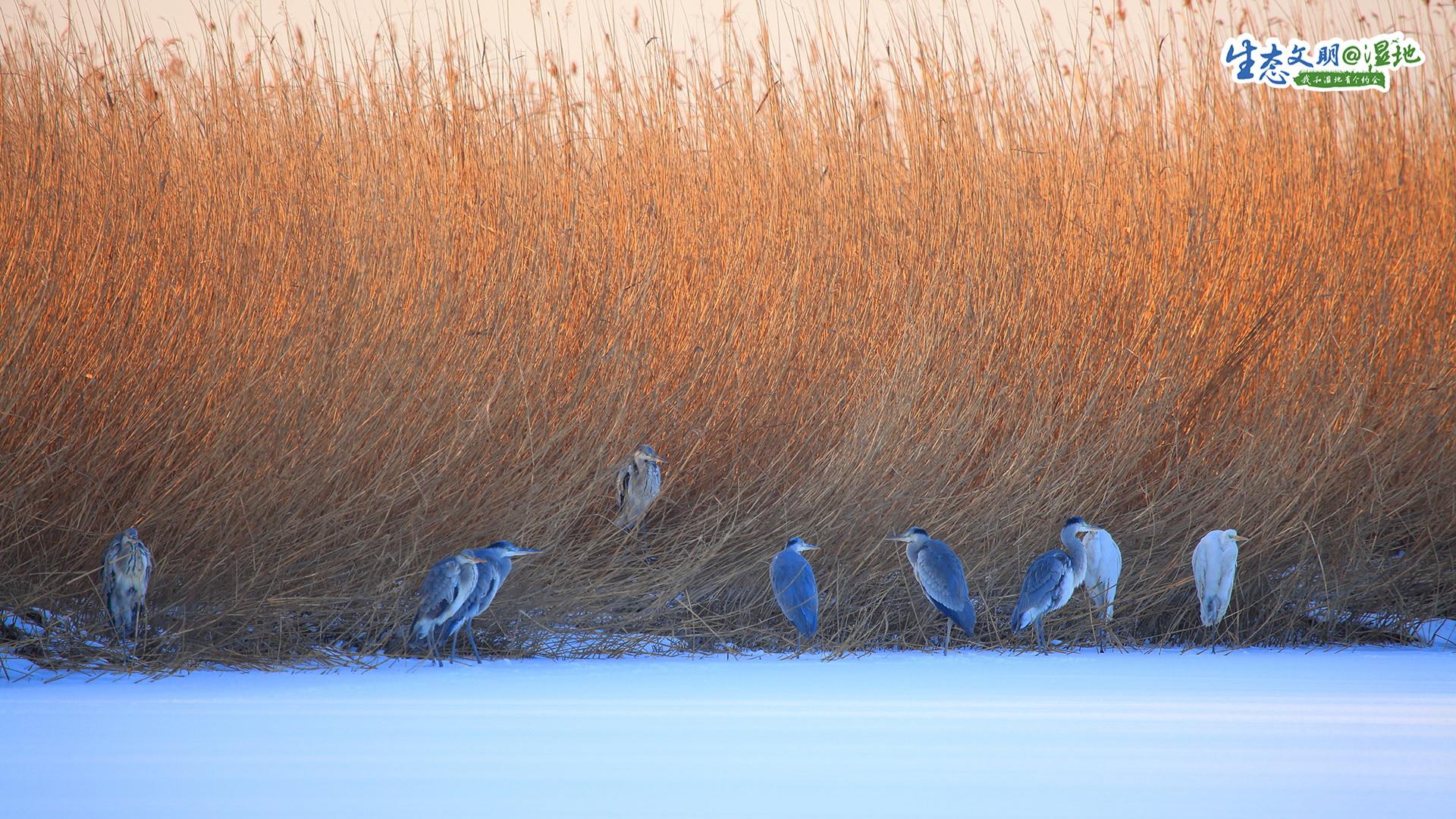 天津湿地类型较全,滨海湿地、河流湿地、湖泊湿地、沼泽湿地和人工湿地均有分布,具有生态功能多样、湿地动植物资源丰富的特点。
