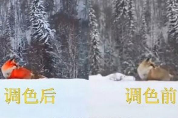 火狐狸造假者道歉 称已承认错误接受批评教育