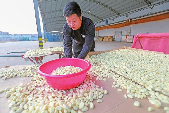 """腊八节带火了""""中国大蒜之乡""""商河的腊八蒜"""