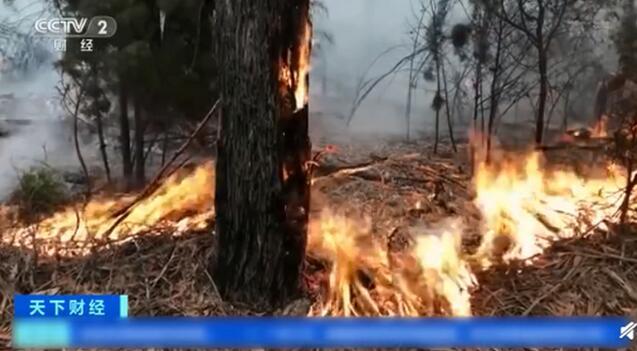 澳山火煙霧至南美濃煙接續累積