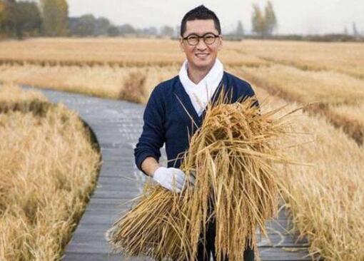 """周杰捐献两万斤大米 他种的有机大米叫""""周先生"""""""