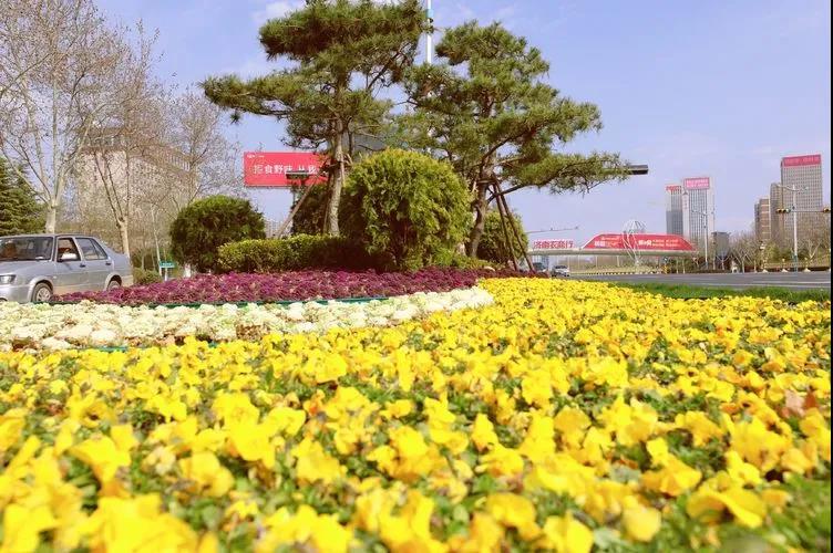 历下区抢抓植树和早春布花有利时机,为城区增绿添彩