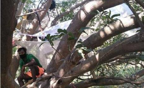 印度村民树上隔离