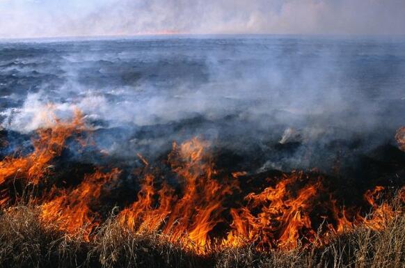 村民烧荒连酿森林火灾