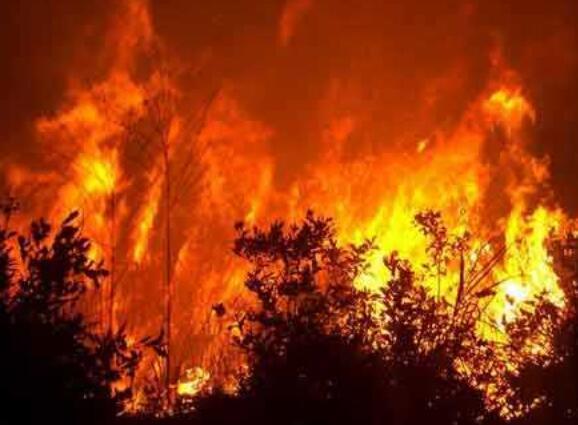 一个烟头点燃2119公顷草原