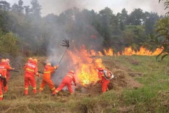 上坟引燃杂草300余亩山林被烧 肇事者被判刑半年