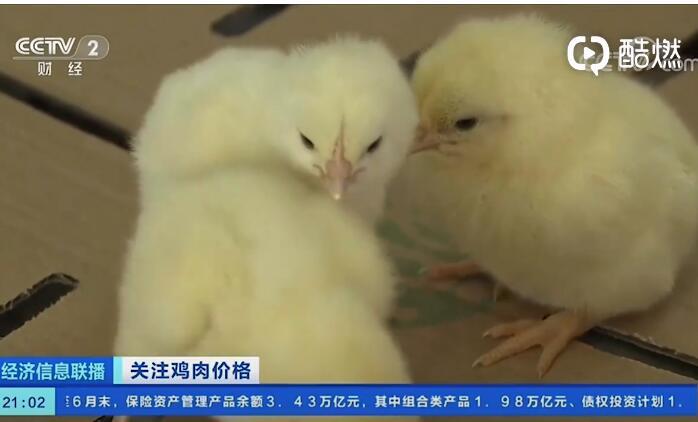 【鸡肉自由了吗?】全国鸡肉价格3年首降 商家大促销行情火热