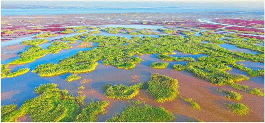 黄河入海千顷绿