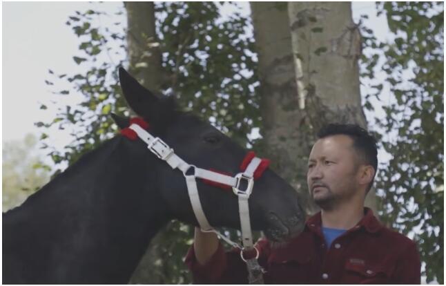 【良驹赠英雄】赠下海救人马主的两匹伊犁马抵达 事迹感动新疆哈萨克族马主