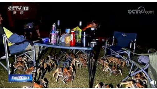 海鲜来了!家庭烧烤时爬来50多只大螃蟹 竟然不让吃