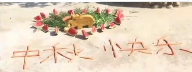 【羡慕】12种野生动物吃到12款定制月饼 定制月饼长什么样?