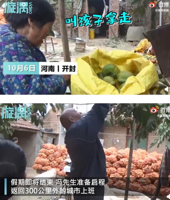 [闵亲摘140斤柿子送儿子返程]【柿柿如意】母亲摘140斤柿子送儿子返程