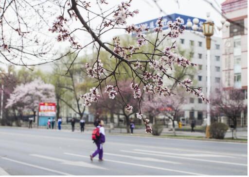 自1月28日至2月底!济南市校外培训机构停止线下教学