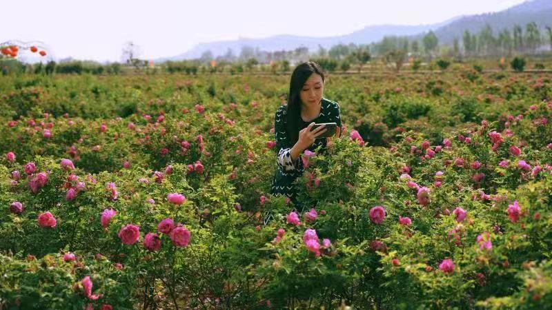 报业花仙子看玫瑰