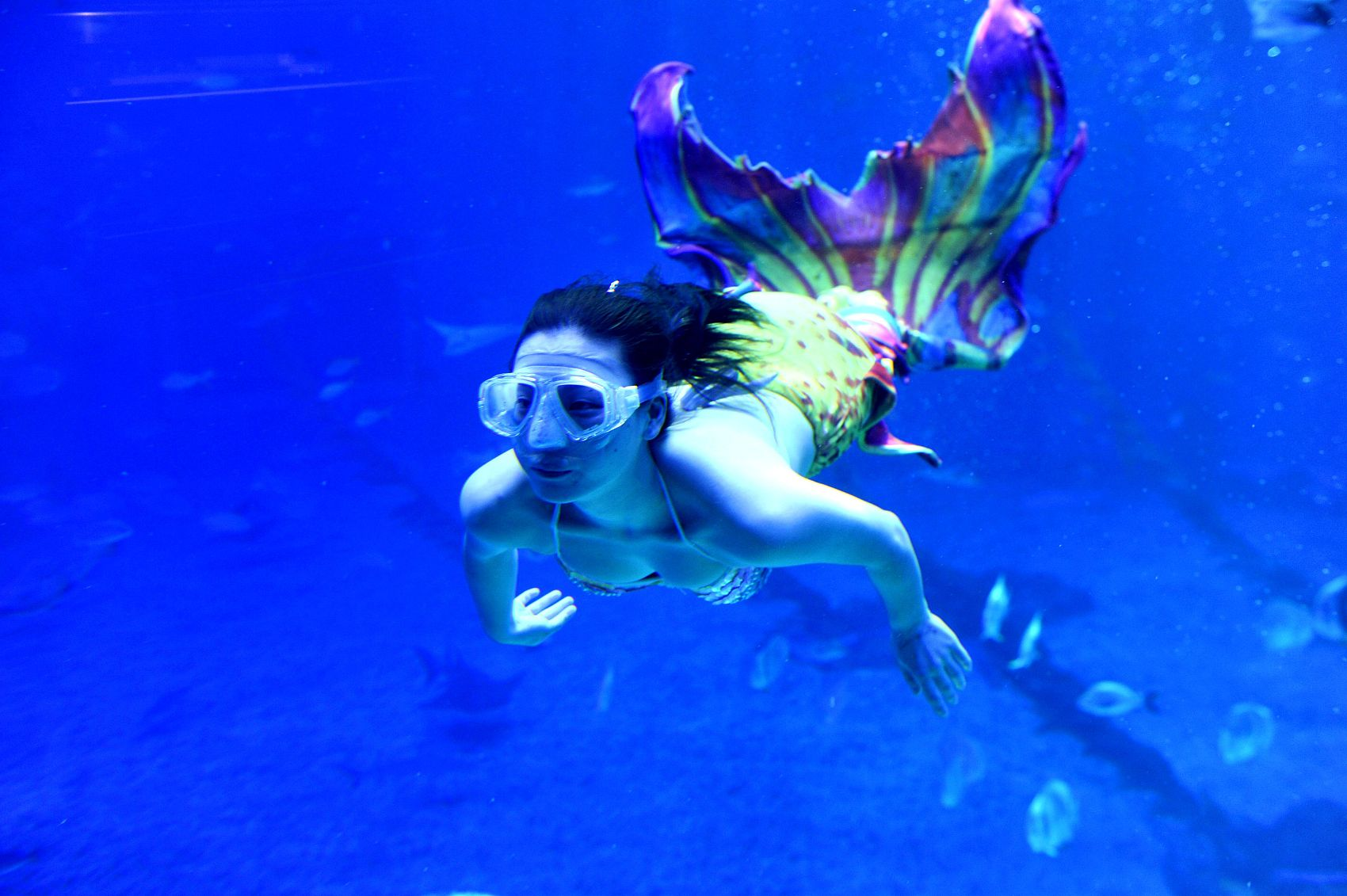 """日照:迎接""""五一""""小长假 海洋公园推出美人鱼表演"""
